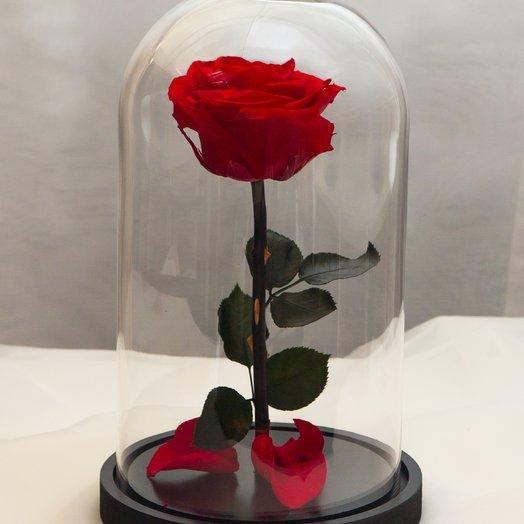 Роза в колбе RozaRose Медиум Красная