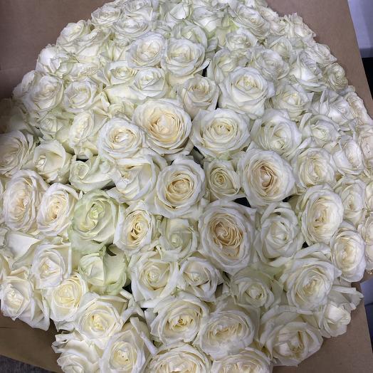 Большой букет из 71 белой розы: букеты цветов на заказ Flowwow
