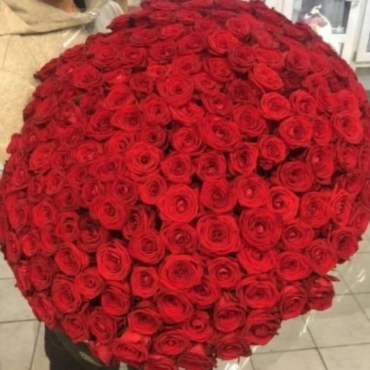 151 роза красная