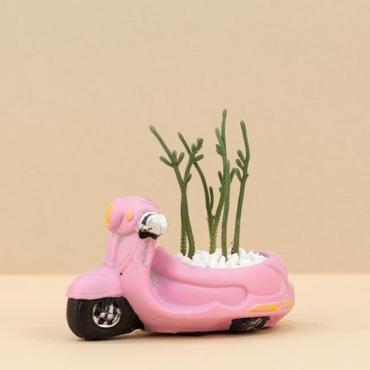 Суккулент в розовой машинке