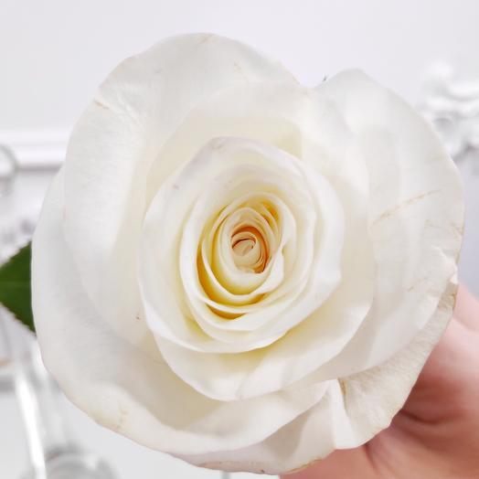 Белая роза(коробка конфет в подарок, условие в описании)