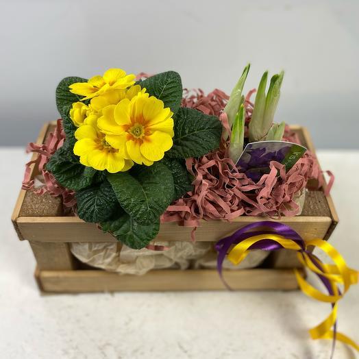 Деревянный ящик с первоцветами 2