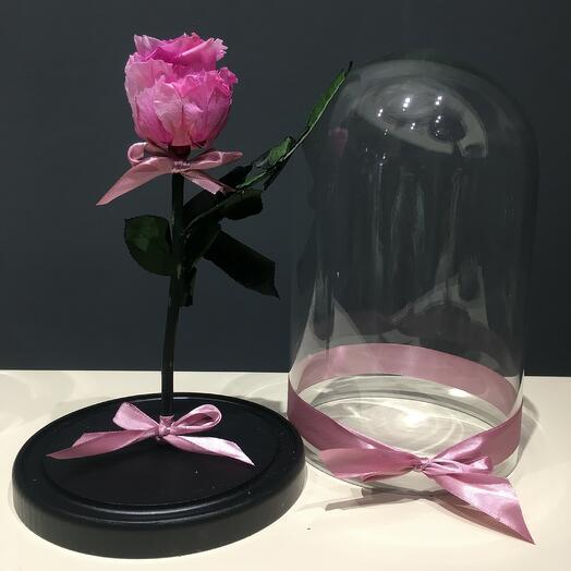 Роза розовая в колбе (бутон до 6 см)