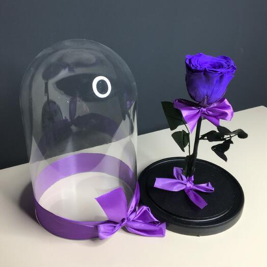 Роза фиолетовая в колбе (бутон до 6 см)