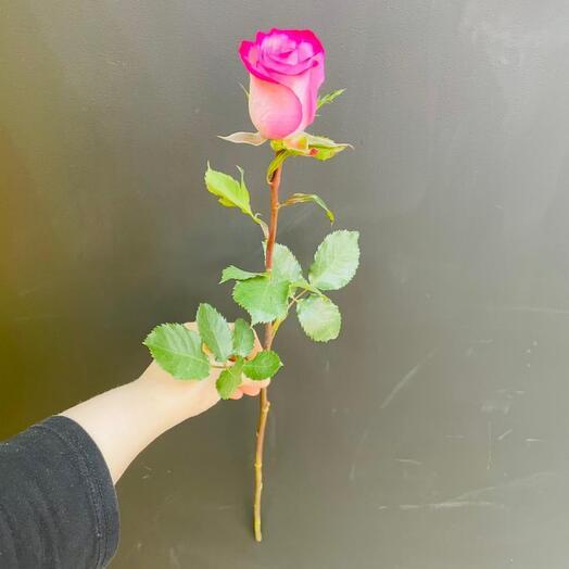 Роза Deep Purple 70 см Эквадор