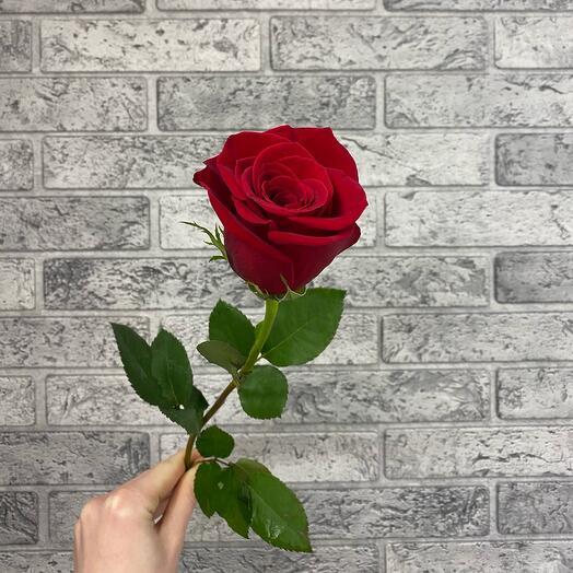 Роза VIP 40см Premium Колумбия