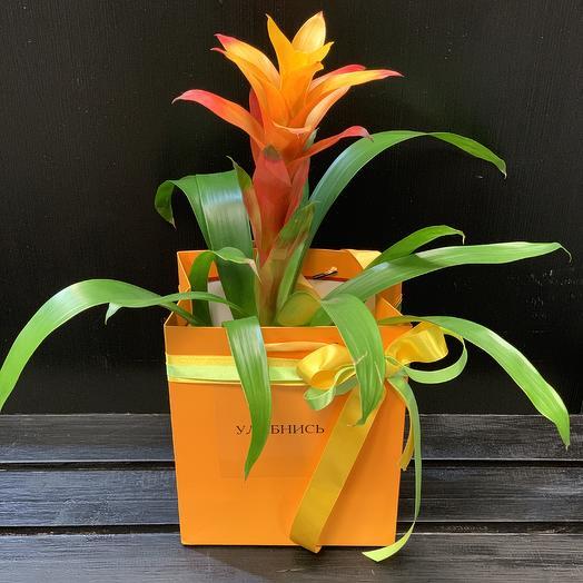 Солнечная гузмания: букеты цветов на заказ Flowwow