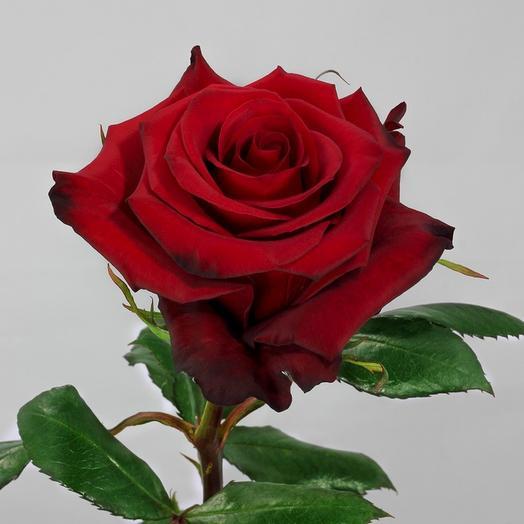Розы эквадор Red Paris 60 см