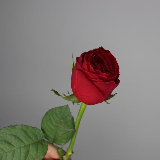 Роза Кения красная 50см
