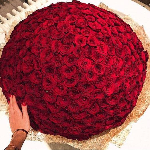 251 роза премиум