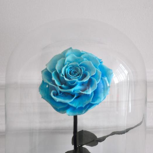 SKY BLUE, ГОЛУБАЯ РОЗА В КОЛБЕ KING SIZE: букеты цветов на заказ Flowwow
