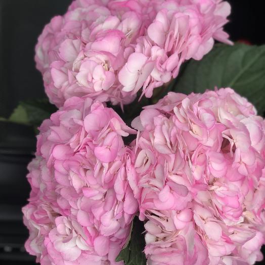 Розовая радость: букеты цветов на заказ Flowwow