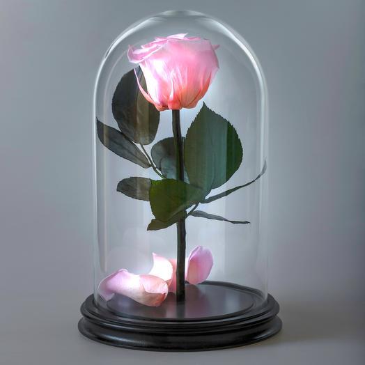 Роза в колбе розовая премиум: букеты цветов на заказ Flowwow