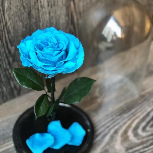 Вечная Роза в колбе бирюзовая: букеты цветов на заказ Flowwow