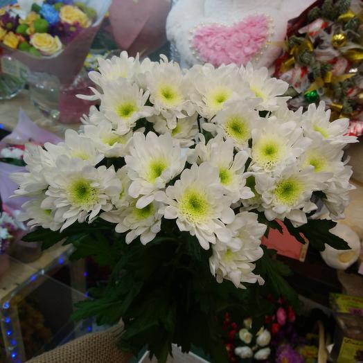 Хризантема кустовая 5