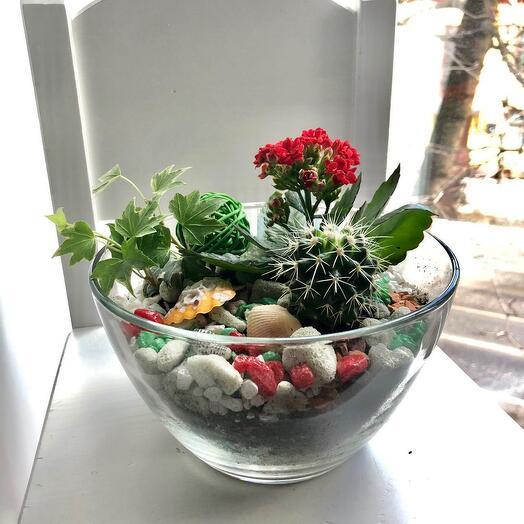 Цветущий интерьерных флорариум