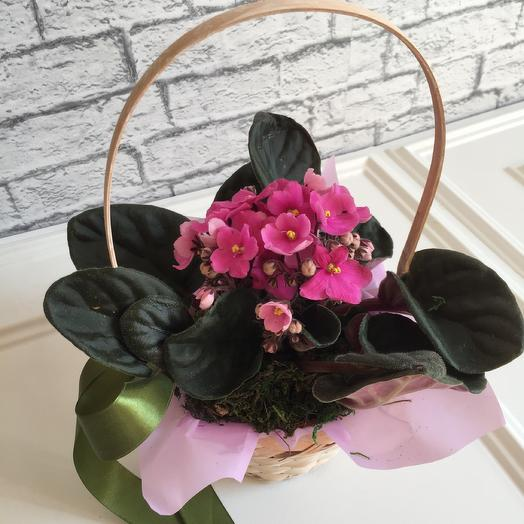 Корзинка «Розовые фиалки»: букеты цветов на заказ Flowwow