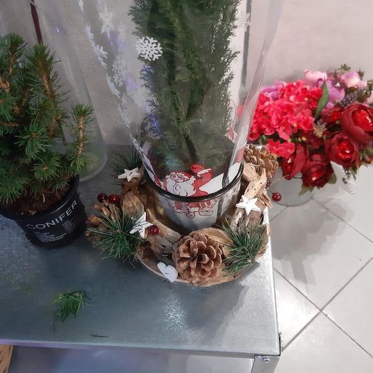 Комнатные растения: букеты цветов на заказ Flowwow