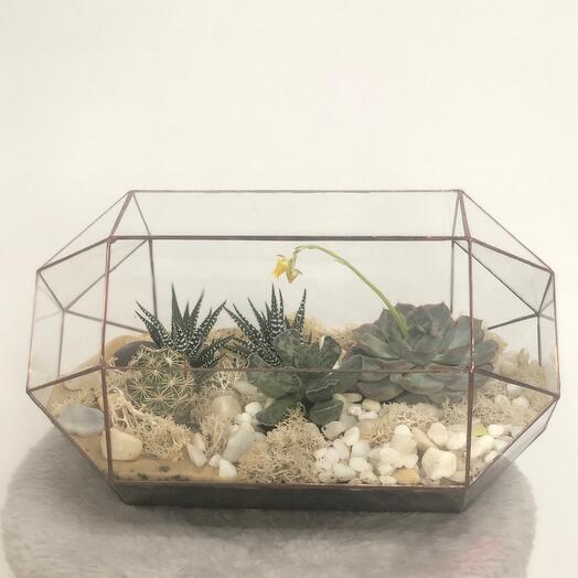Флорариум protea