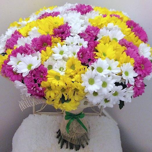 Хризантема кустовая 45: букеты цветов на заказ Flowwow
