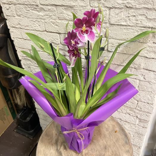 Мильтония коллекционная: букеты цветов на заказ Flowwow