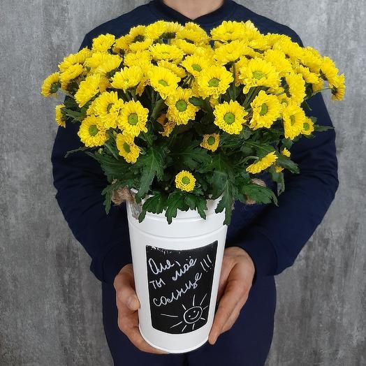 Солнечная весточка: букеты цветов на заказ Flowwow