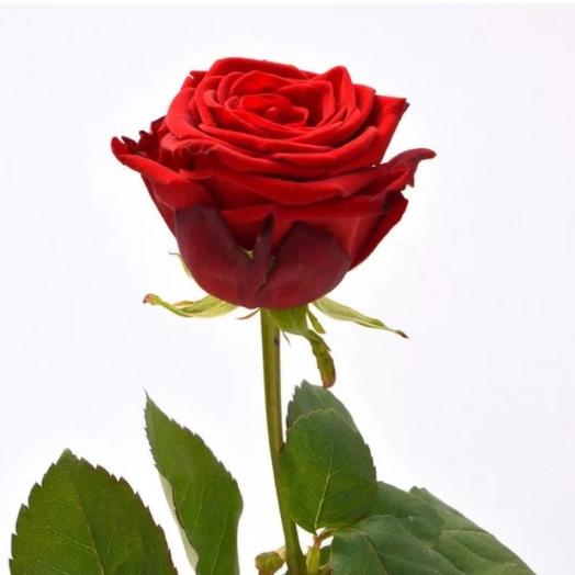 Роза Ред Наоми 60см 1шт