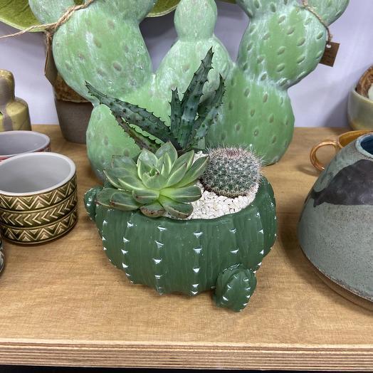 Флорариум Мексика