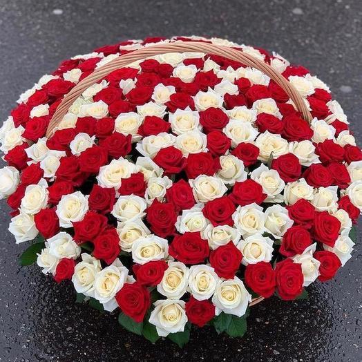 201 Роза 🌹️