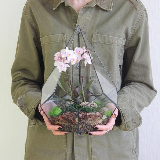 Флорариум Кристалл с Орхидеей