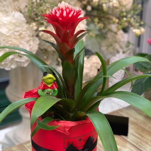 Подарок для мужчины: букеты цветов на заказ Flowwow