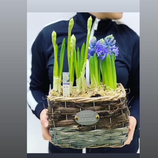 Ты моя Редкость: букеты цветов на заказ Flowwow