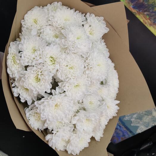 Зефирная хризантема Нежный Алтай