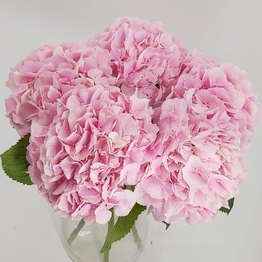 Розовое облако: 5 шикарных гортензий: букеты цветов на заказ Flowwow