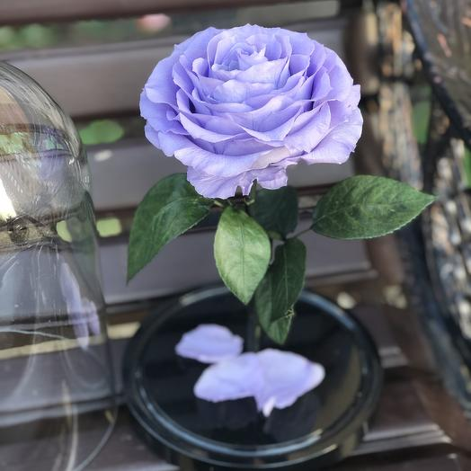 Вечная роза в колбе лавандовая: букеты цветов на заказ Flowwow