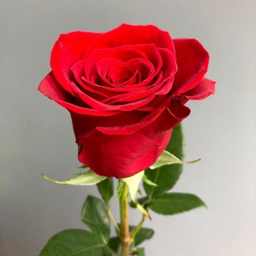 ✅ Красная роза 1 шт