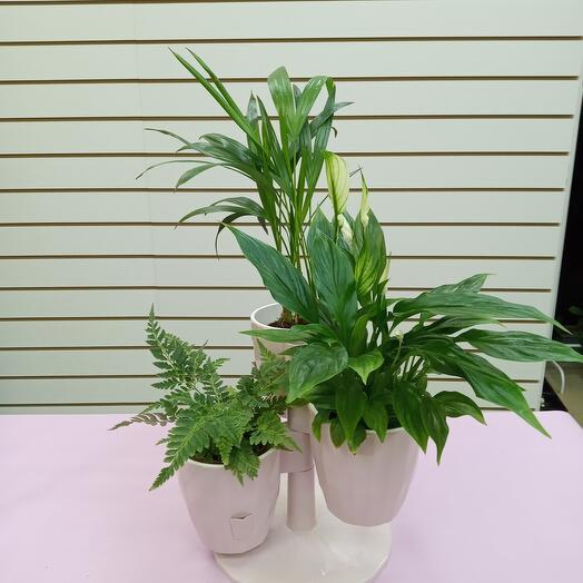 Комплект из 3х комнатных растений