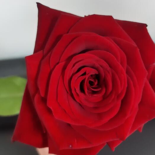 Красная роза 80 см
