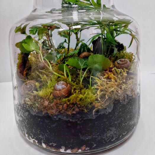 Флорариум мини лес (радермахера, плюс и др)
