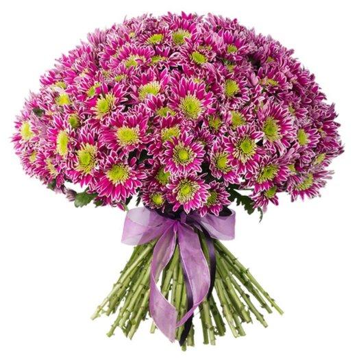 51 хризантема кустовая