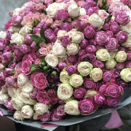 101 Bush rose