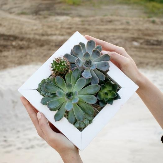 Рамочка с эхевериями: букеты цветов на заказ Flowwow