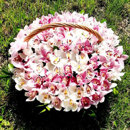 101 Орхидея