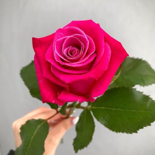 Роза Aqua