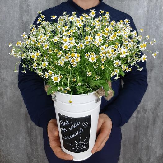 Ромашковое послание: букеты цветов на заказ Flowwow