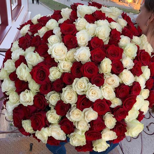 151 белая и красная роза премиум