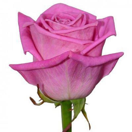 Роза Аква поштучно