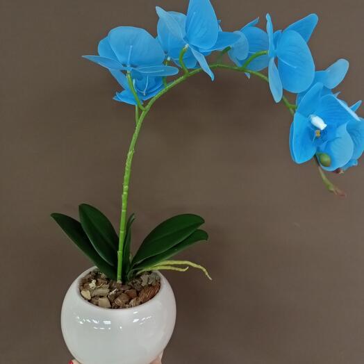 Синяя орхидея исскуственная