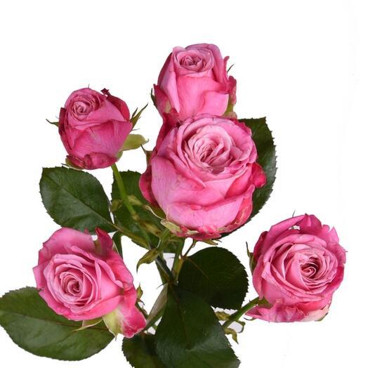 Роза пионовидная темно розовая кустовая ветка 50 см