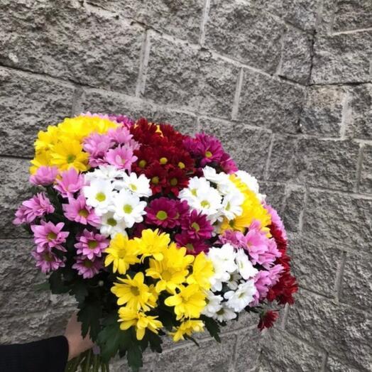 Микс из 25 кустовых хризантем